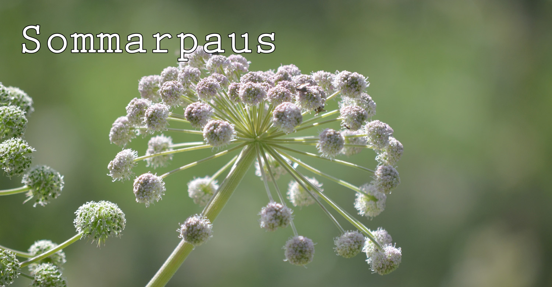 Sommarpaus
